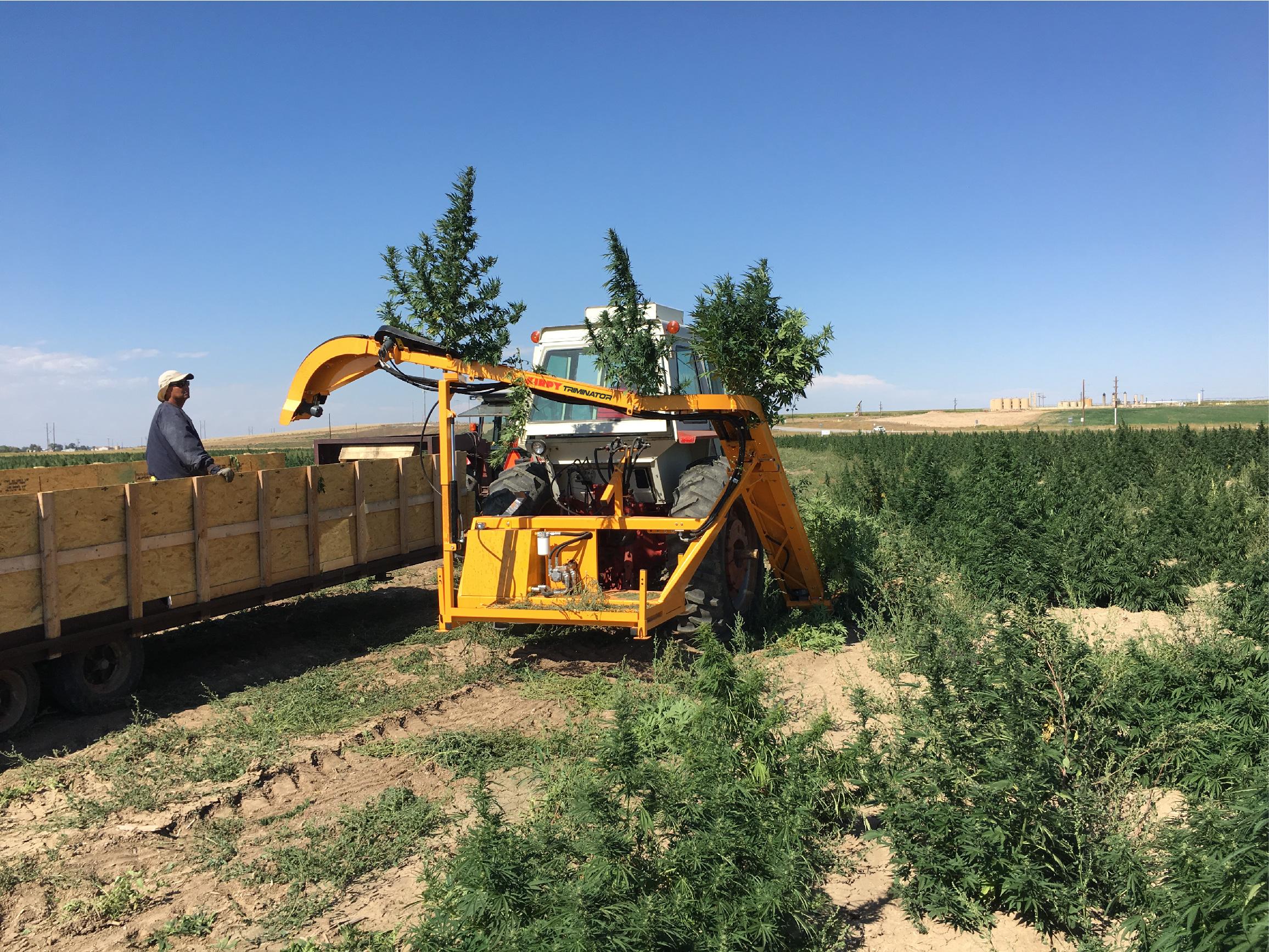 Triminator Releases a Whole-Plant CBD Hemp Harvesting
