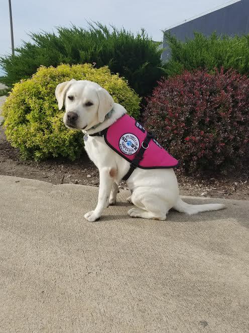 Diabetes Service Dog California