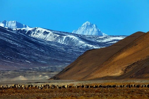 Travelers Like to See the Combination of Culture and Scenery in Tibet, Great Tibet Tour Finds