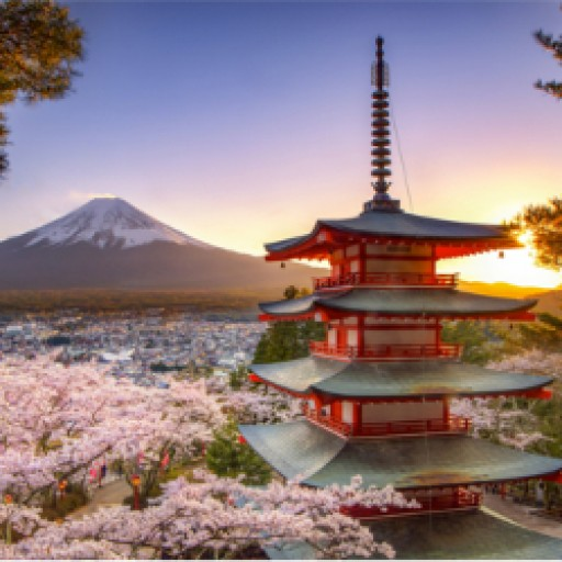 Japan Set for the Final Cherry Blossom of the Heisei Era