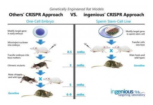 Breakthrough CRISPR/Cas9 Rat Model Technology